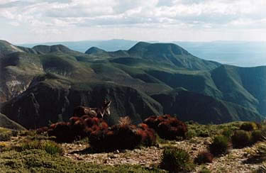 The Catorce Mountains